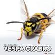 Extesizer - Vespa Crabro